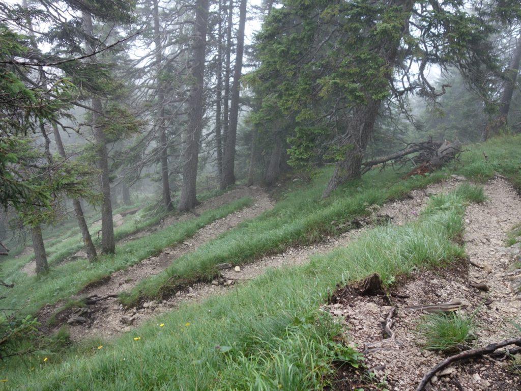 Dann geht's ans Eingemacht, in verblockten Spitzkehren schraubt man sich durch den westseitigen Steilhang.