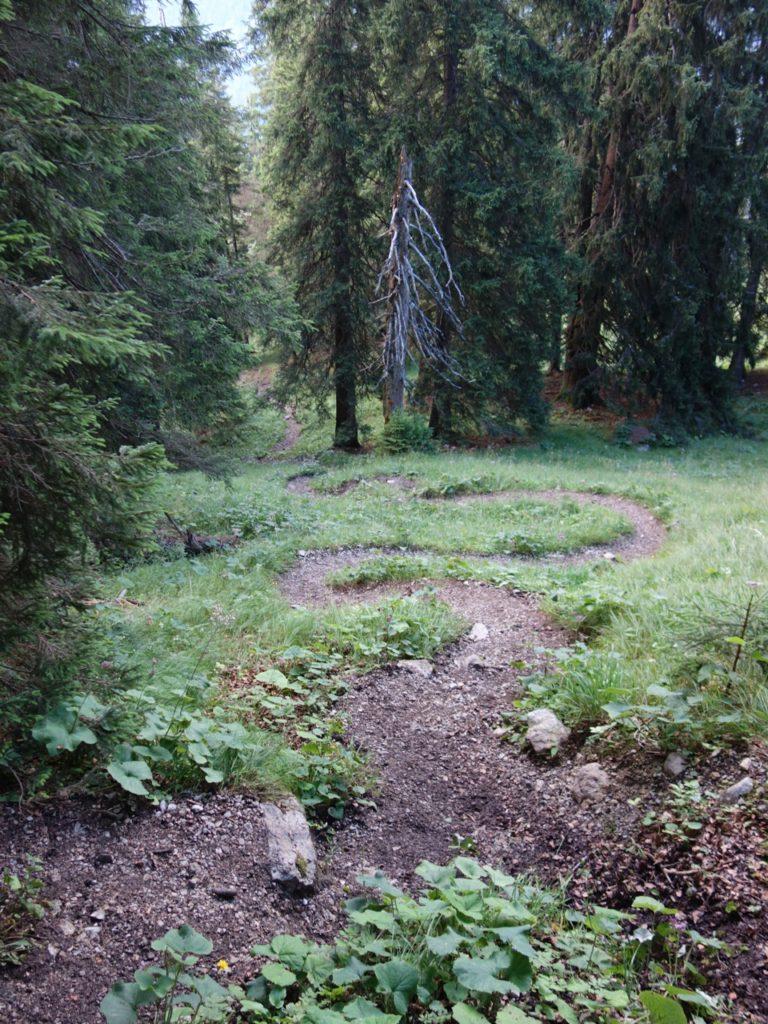 kurvigen Waldweg bis zum Weissenbachkopf.