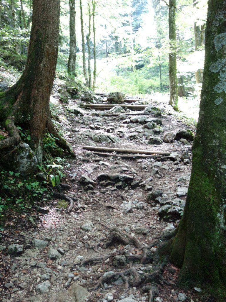 Ein knorriger alter Steig führt zur Talstation der Materialseilbahn...